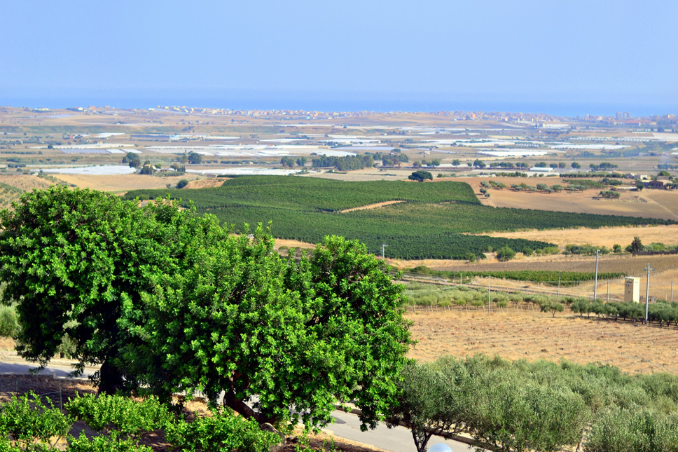 Quignones-winery-view
